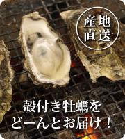能登・中島産の殻付き牡蠣を一斗缶に入れてお届け